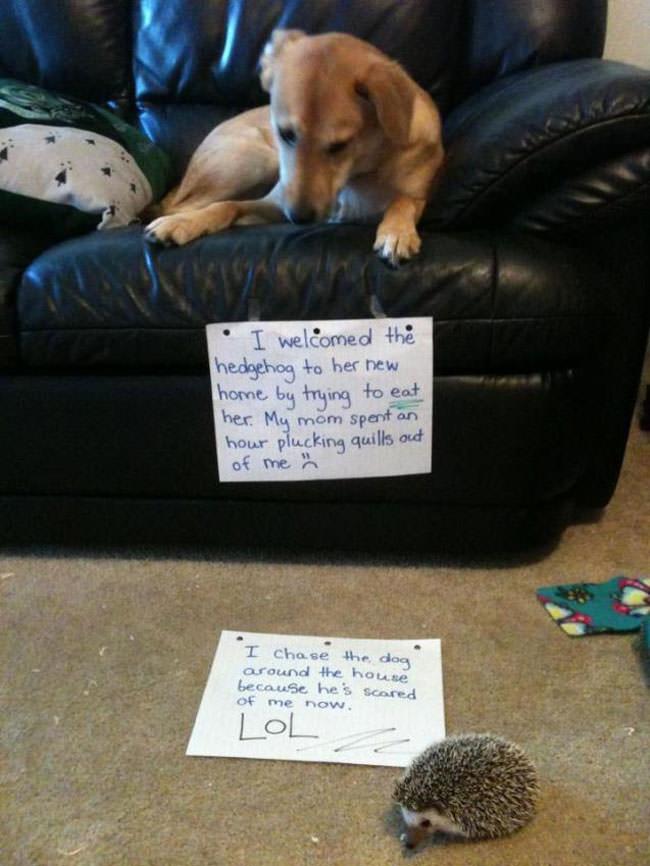 30-perro-divertidos 8