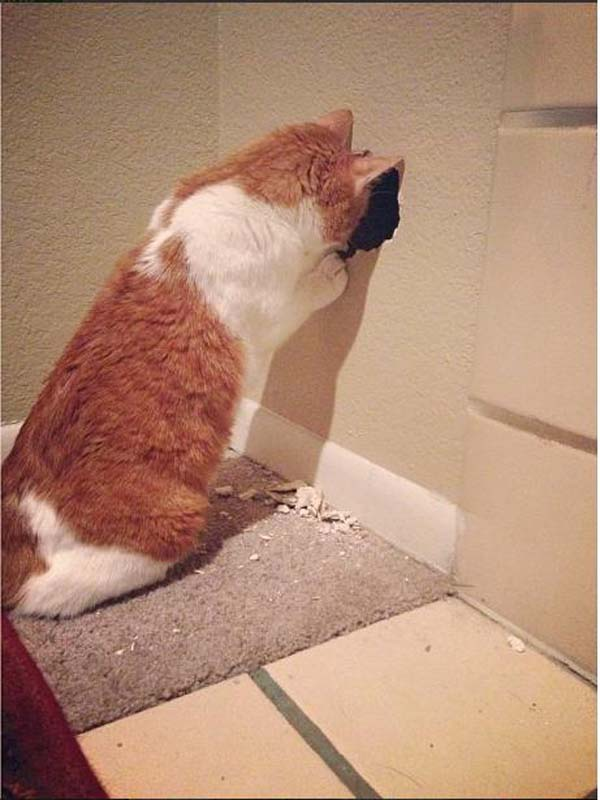 gatos-departamento 1